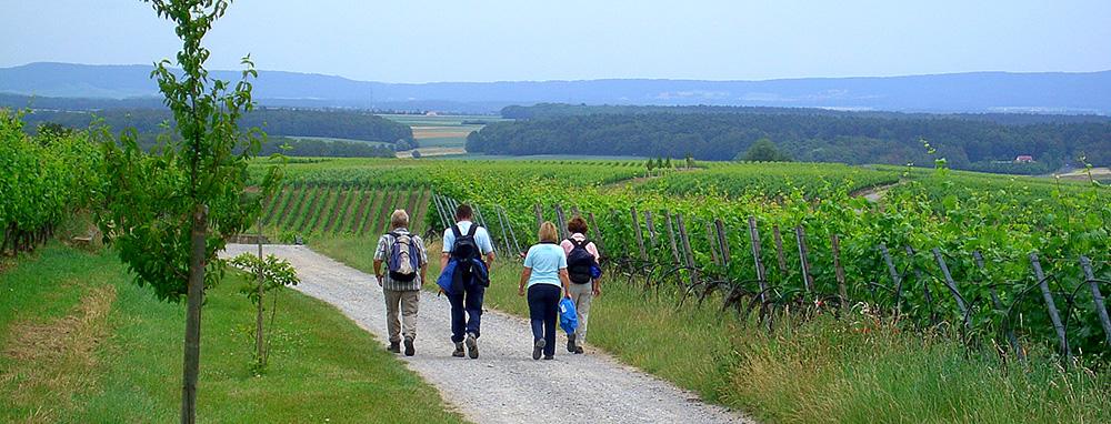 Ayurveda für Würzburg in Sommerhausen
